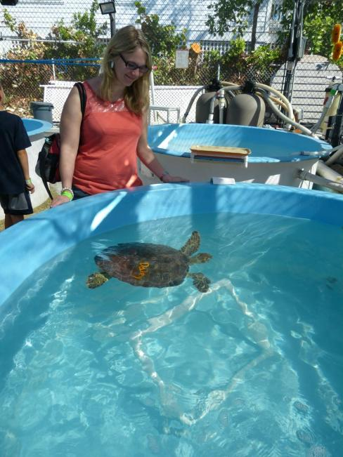 Im Sea Turtle Hospital in Marathon
