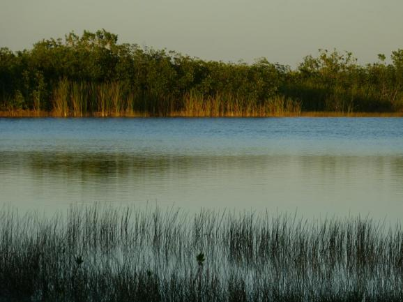 Nine Mile Pond in den Everglades