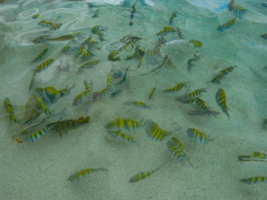 Tropische Fische-1200x900